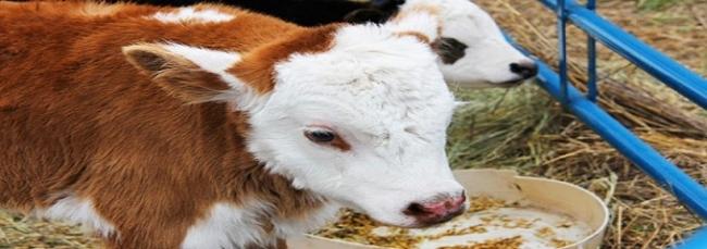 مدير الإنتاج الحيواني : نعاني عجزا هيكليا كبيرا في الموارد العلفية