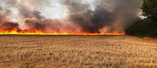 سلسلة الحرائق تستمر: محاولات لإخماد حريقين في منطقة غابية بقربص من ولاية نابل و في حقل حبوب من معتمدية قربة