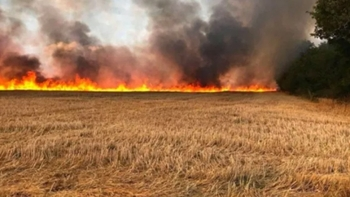 القصرين: السيطرة على حريق  اندلع في أكثر من 100 هكتار و الأبحاث الأولية  تؤكد أن عدد هام من الحرائق  كانت بفعل فاعل