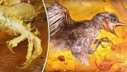 علماء صينيون وأجانب يكتشفون أحفورة طيور قديمة من الكهرمان ترجع إلى حوالي 100 مليون سنة