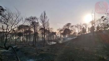 نابل: السيطرة على الحريق الذي شب أمس ظهرا بغابة البندق بمعتمدية بني خيار