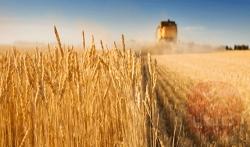 نابل: موسم الحصاد شارف على الانتهاء وتقديرات تؤشر لصابة قياسية (المندوب الجهوي للتنمية الفلاحية)