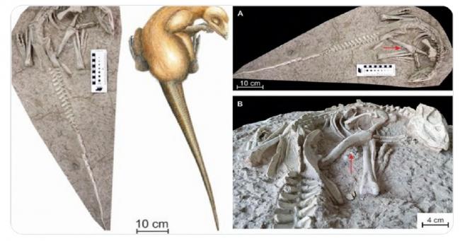 بواسطة مزارعين في الصين تم اكتشاف ديناصورات جديدة دفنت حية منذ نحو 125 مليون سنة
