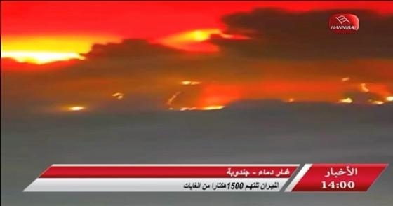 غار دماء جندوبة ..النيران تلتهم 1500 هكتاراً من الغابات